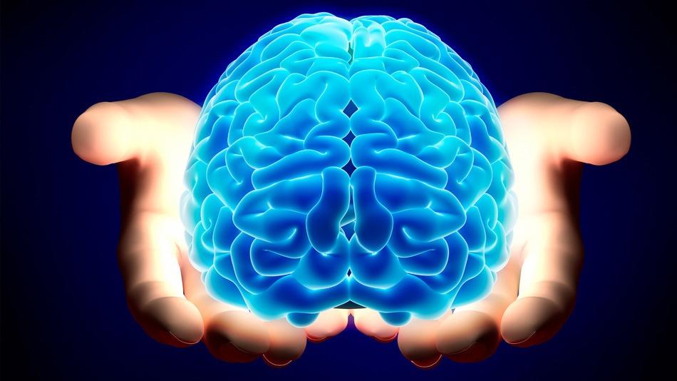 brain-hands