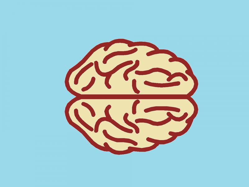 brain-494153_960_720