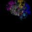 cranium-3244118_960_720